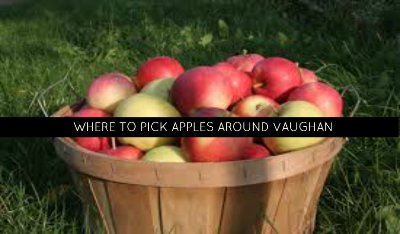 Where to pick apples around Vaughan